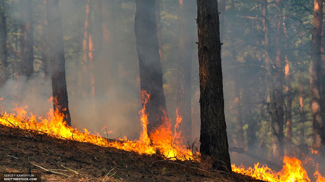Лесные пожары захватили более 6 тысяч гектаров в Забайкалье