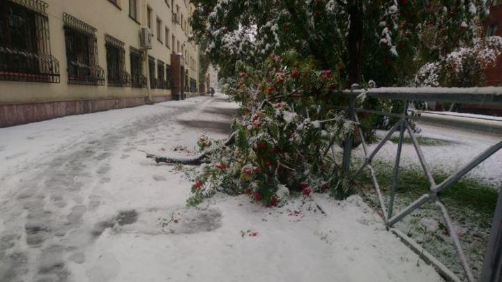 Деревья сломались в нескольких районах Кемерова из-за снегопада