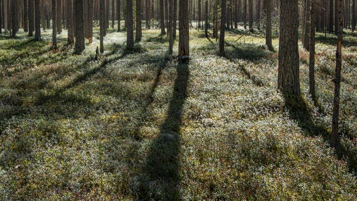 В лесу в Ленобласти нашли бездыханное тело пенсионера