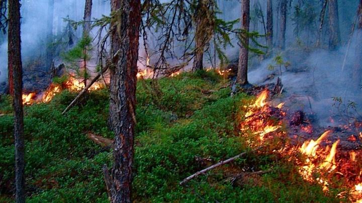 В Ивановской области с 15 июля возобновлен особый противопожарный режим