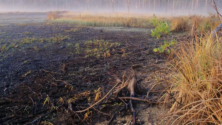 Все выжжено: На берегу озера под Петербургом обнаружили странное белое вещество