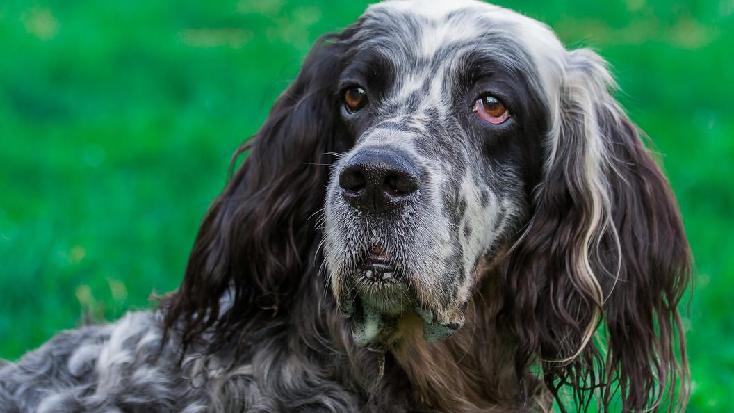 Суд Италии принудил работодателя оплатить женщине больничный по уходу за собакой