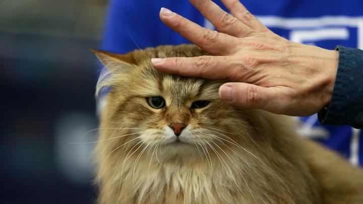 Это угроза: В Голландии хотят запретить выпускать кошек на улицу