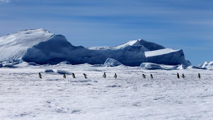 Матч на фоне айсбергов и пингвинов: В год 200-летия открытия Антарктиды Россия планирует провести на континенте хоккейный турнир