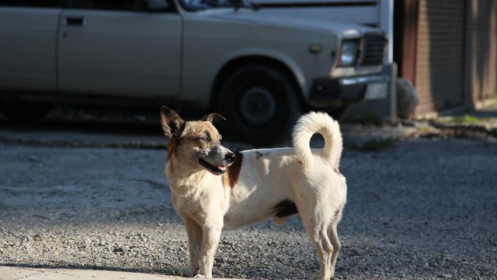В Новосибирске насчитали около 40 тысяч бездомных собак и кошек