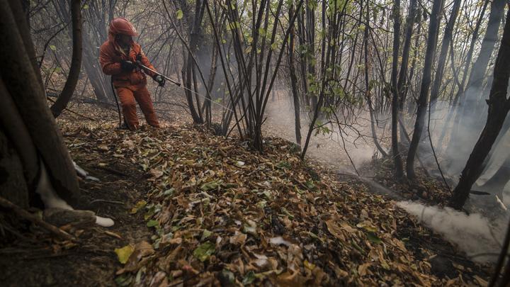Брюссель оценил убытки от лесных пожаров в Португалии в 50 млн евро