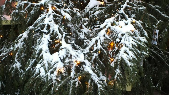 В Центральную Россию на Рождество придут настоящие морозы