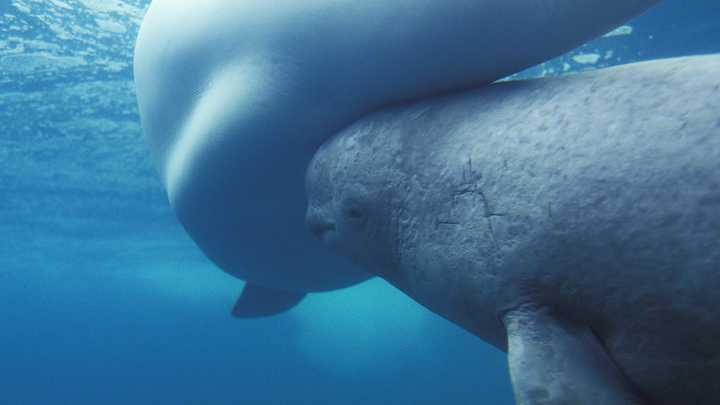 Штраф 56 миллионов за трёх косаток: Суд наказал организаторов китовой тюрьмы