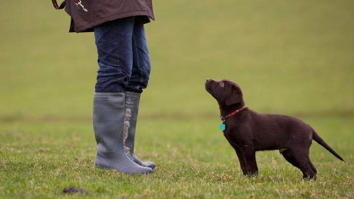 Британцы дрессируют сына, как собаку: Спец по животным обещает, что он будет сострадательным